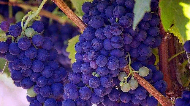 https://pixabay.com/id/photos/anggur-buah-buahan-tanaman-merambat-690977/