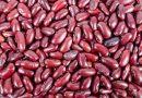 Kacang Merah : Kaya Protein dan Serat